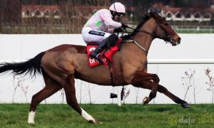 Faugheen-Horse-Racing